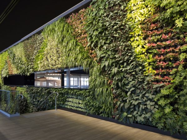 QUEENSLAND'S LARGEST EVER GREENWALL UNVEILED